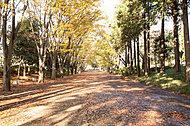 鶴間公園 約850m(徒歩11分)