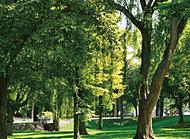 北海道大学 約180m(徒歩3分)