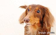 大切なペットも安心して一緒に暮らせます。※ペットの種類・大きさなどに関しては制限がございます。詳しくは係員にお尋ねください。