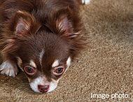 大切なペットも一緒に暮らせるペット可マンション。敷地内に便利なペット足洗い場も設けています。※ペットの種類・大きさ・頭数には制限がございます