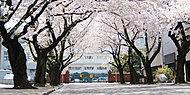 川越女子高等学校 約4,700m(自転車19分)