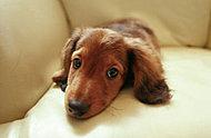ペットも家族の一員として、大切なペットと一緒に、快適な毎日をお過ごしください。※別途管理規約がございます。詳しくは係員にお尋ねください。