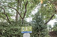 どんぐり山児童遊園 約320m(徒歩4分)