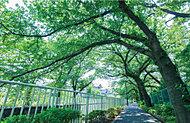 神田川遊歩道 約140m(徒歩2分)