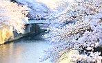 目黒川 約100m(徒歩2分)