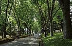 氷川参道 約50m(徒歩1分)