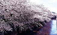 石神井川 約180m(徒歩3分)