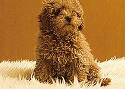 大切な家族の一員でもある、ペットと一緒に暮らすことができます。※飼育できる種類、大きさ、頭数には制限があります。