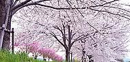 桂川緑地 約30m(徒歩1分)※平成27年4月撮影