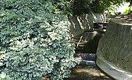丸子川親水公園 約180m(徒歩3分)※平成27年10月撮影