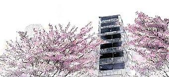 外観完成イメージイラスト ※掲載の外観完成イメージイラストは図面を基に描き起こした外観完成イメージと現地東側の桜を描いたもので、実際とは多少異なります。また、桜は本物件のものではありません。