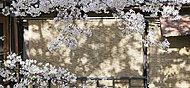 鴨川 約600m(徒歩8分)(平成28年4月撮影)