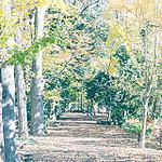 仲田の森蚕糸公園 約860m(徒歩11分)(2016年12月撮影)