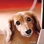 一部住戸※1は大型犬の飼育も可能です。※ペットの飼育については管理規約・使用細則の規定を遵守していただきます。※1 A1・A1'・A2・B・B'・C1・C2・D・Eタイプ