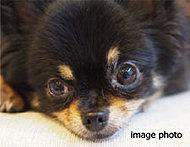 大切な家族の一員となるワンちゃんなどのペットとこれまでと同じように同居いただけます。※ペット飼育には制限がございます。係員にお尋ねください。