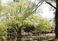 円山公園 GT:徒歩13分/約970m・BT:徒歩13分/約980m※3