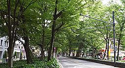 けやき並木通り 約290m(徒歩4分)