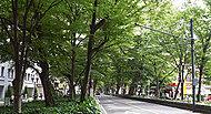 けやき並木通り 徒歩4分/約290m