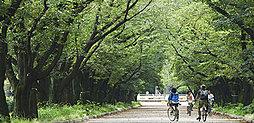府中の森公園 約940m(徒歩12分)
