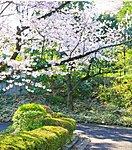 池田山公園 徒歩10分/約800m ※平成27年4月撮影