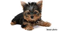 大切な家族の一員である、ペットとの同居が可能です。※大きさ、頭数には制限がございます。詳細は係員にお問い合わせください。