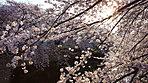 神田川 徒歩15分/約1,150m※提供写真