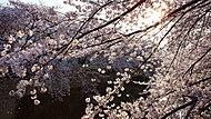 神田川 約1,150m(徒歩15分)※提供写真