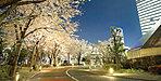 赤坂サカス 約400m(平成29年3月撮影)