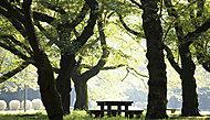 小金井公園 約1.22km(自転車5分)
