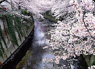 神田川 約210m(徒歩3分)