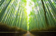 竹林の小径 約500m(徒歩7分)