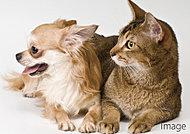 大切な家族の一員である、ペットと一緒に暮らせます。※ペットの種類に制限がございます。詳しくは係員までお問い合わせください。
