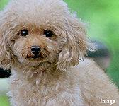 ※マンション内で飼えるペットの種類・サイズには制限があります。詳しくは係員におたずねください。