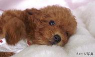 ご家族の大切な一員である、かわいいペットと一緒に暮らせる、ペット飼育可能マンションです。(管理規約に準ずる)