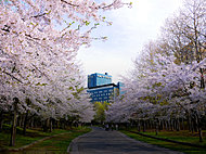 中島公園 約380m(徒歩5分)※1
