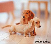 ※ペットの種類・数・大きさ等には制限があります。※ペットの飼育は管理規約等を厳守していただきます。