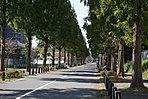 外観・メタセコイヤの並木道