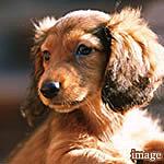 ペットも大事な家族の一員と考え、ペット対応マンションにいたしました。※飼育できるペットの種類や頭数などについては管理組合の規約に基づきます。