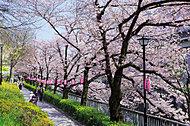 江戸川公園 約260m(徒歩4分)