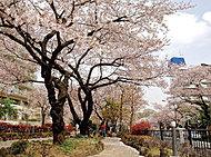 播磨坂さくら並木 約1,220m(徒歩16分)