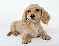 大切な家族の一員であるペットにも快適な生活環境をご提供します。※詳しくは係員にお尋ねください