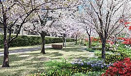 既存樹のメタセコイアが、庭園邸宅の象徴に。5月の新緑の頃、11月の紅葉の頃に広がる美しい光景は圧巻。【花見桟橋】の庭とともに、早朝から夕方まで、ここに住まう方々だけの豊かな散歩道となるでしょう。