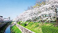 山崎川(四季の道) 約950m(徒歩12分)
