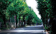 現地前の並木道 約50m(徒歩1分)