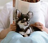 飼育ルールをあらかじめ設け、その範囲でペットの飼育が可能です。飼わない方にも、気持ちよく暮らせるようにしています。