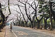 谷中霊園 約1,140m(徒歩15分)