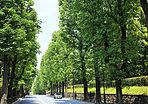 東宮御所横の並木道 約160m(徒歩2分)(2019年5月撮影)