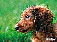 ペット用足洗い場を備えたペット対応マンションです。規則によるルールとマナーを守ったペット飼育が可能です。