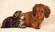 大切なパートナーと共に快適に暮らしていただけます。※ペットの大きさ等には管理規約による制限がございます。