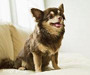 大切なご家族の一員でもあるペットとの暮らしを2匹まで対応しました。※ペットの種類、大きさには制限があります。